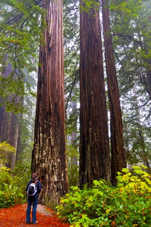 redwood: Redwoods National Park hiking girl on the trail