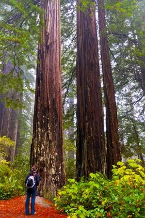 Redwoods National Park vandring flicka på spåret Stockfoto