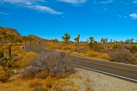 Road through Joshua Tree National Park - California photo