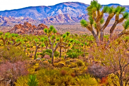 joshua tree national park: Joshua Tree Naional Park - California Stock Photo