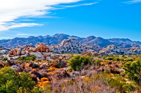 Joshua Tree Naional Park - California photo