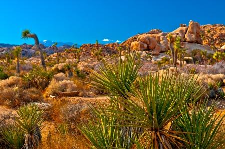 Joshua Tree Naional Park - California Stock Photo