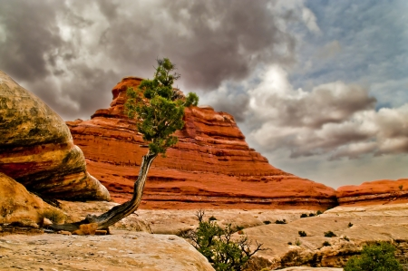 canyonlands: Beautiful single tree against dramatic stormy sky in canyonlands Stock Photo