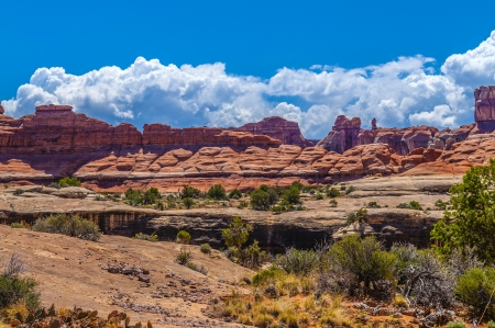 canyonland: Blue Cloudy Summer sky over Needles district