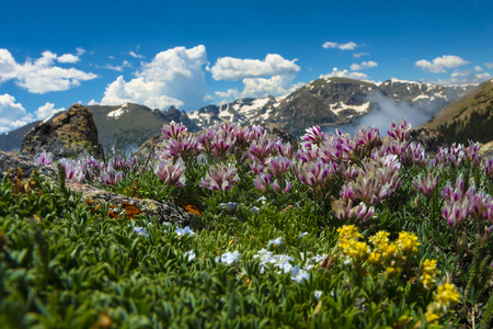 Wild Flowers Mountain Range of the Colorado Rockies