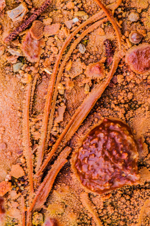 mineralization: Macro Shot of a Crystal Geyser Utah