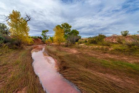 cottonwood  tree: Muddy Creek and Autumn Foliage - Utah Fall Landscape Stock Photo