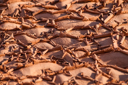 Close-up texture of a dry bottom of a lake in Utah photo