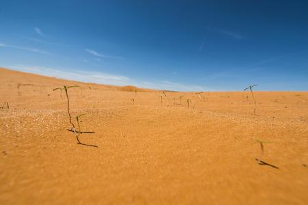 plantas del desierto: Pequeñas Plantas del desierto de estar Detalle de primer plano