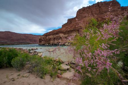paria canyon: Colorado River at Lees Ferry Glen Canyon Arizona