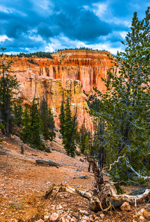 ponderosa: Dramatic Clouds over the Ponderosa Canyon Bryce National