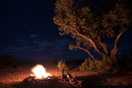 noche estrellada: Hermosa Hoguera del desierto brillante Noche estrellada Un solo �rbol de Utah