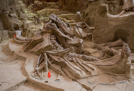 former years: The Mammoth Site displays mammoth bones approximately 26,000 years old, left as they were discovered in a former sinkhole.
