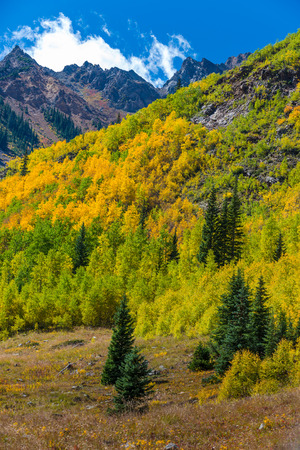 fall trees: Colorado Fall Foliage near Conundrum Hot Springs Trail