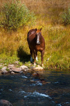 caballo bebe: Single brown horse by the river vertical composition