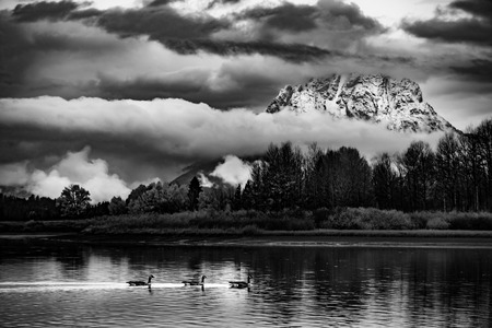 oxbow: Autumn in the Tetons Wild Geese and Thick Clouds