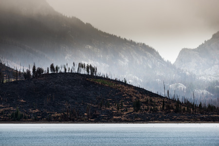 wildfire: Wildfire aftermath Jackson Lake Grand Teton National Park Stock Photo