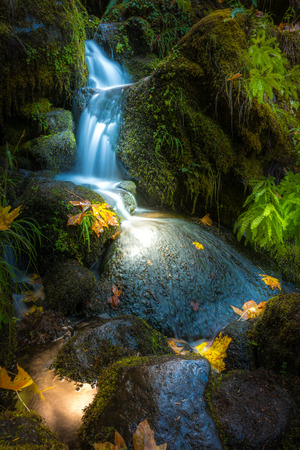 cascade: Waterfall Background Thick Green Moss Beautiful Cascade and Autumn Leaves Stock Photo