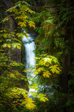 oregon cascades: Autumn Colors Oregon Landscape Toketee Falls Douglas Country