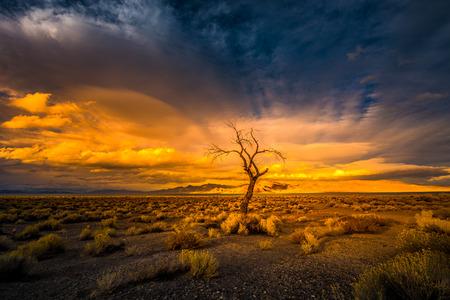 reno: Lone Tree at Sunset Pyramid Lake Nevada