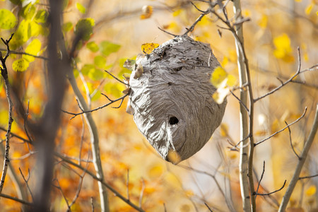 Wasp Nest in forest