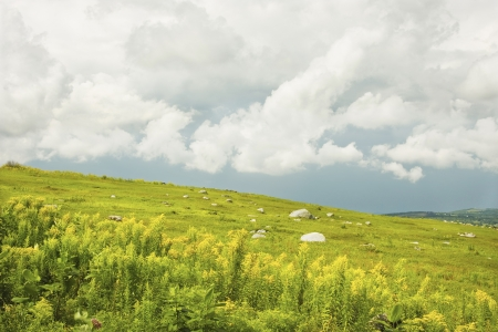 goldenrod:  Blueberry barrens and goldenrod with dramatic sky in Maine
