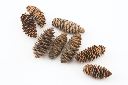 hemlock: Conos del pino en el fondo blanco