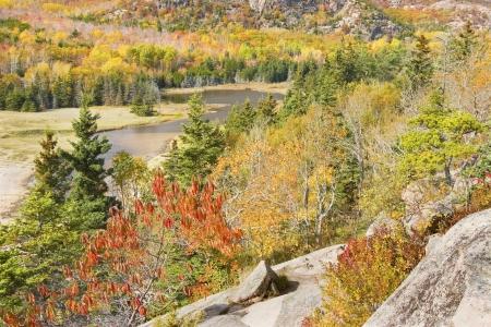 Autumn color near Sand Beach from Great Head Acadia National Park in Maine  photo