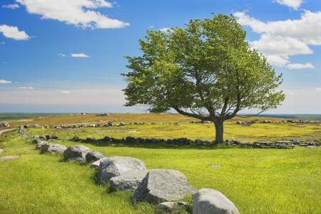 rockwall: Single tree and blue sky in blueberry field Maine