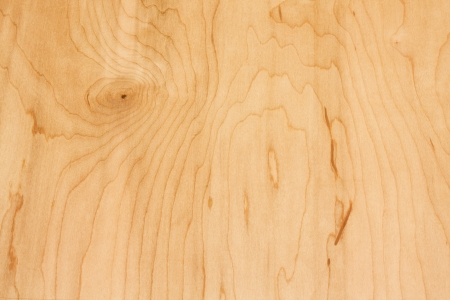 Close-up of white birch wood grain  Imagens