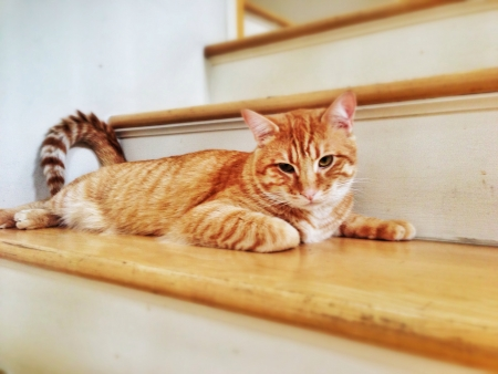 An orange tabby cat rests on a step