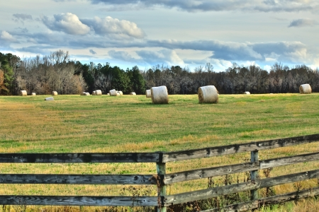 Hay bails are scattered around an open field surrounded by trees under puffy white clouds on a Autumn day along Highway 75 in Georgia