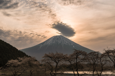 Sunrise over Mt. Fuji and Cherry Trees Blooming by Lake Tanuki