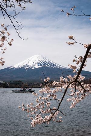 Mt. Fuji over Lake Kawaguchi and Cherry Blossoms Sajtókép