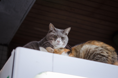 Undomesticated Cats Relaxing on a Vending Machine Banque d'images