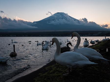 Mt. Fuji and Swans