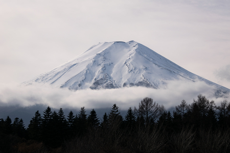 Mt. Fuji over a Forest