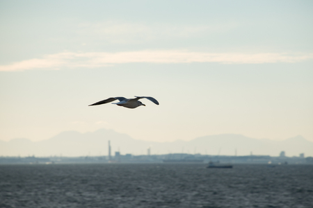 A Seagull Flying over the Sea