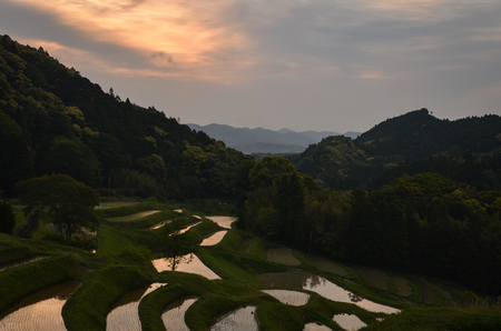 Terraced Rice Fields in Japan (Ooyama Senmaida in Chiba Prefecture) Banque d'images