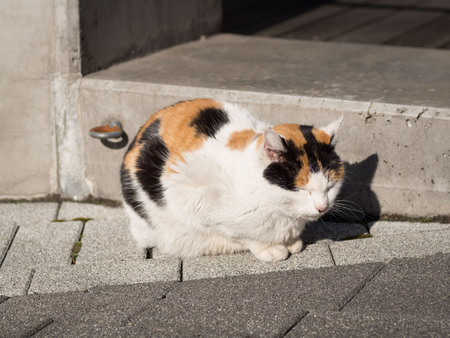 An Undomesticated Calico Cat Sitting on the Street in Tokyo Banque d'images