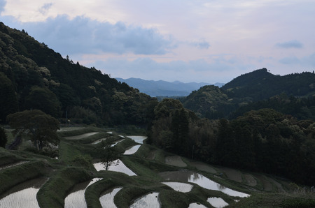 Terraced Rice Fields in the Morning Stock fotó