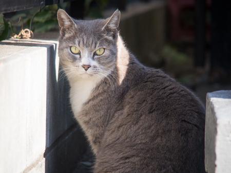A Female Stray Cat Glaring at the Camera