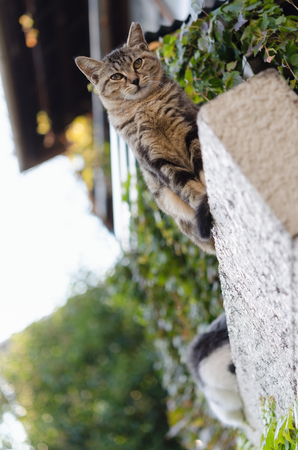 A Stray Cat Looking Down the Camera from the Wall