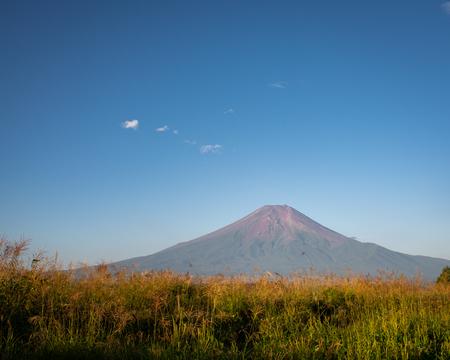 Mt. Fuji over a Filed of Silver Grass