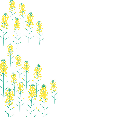 canola: Vector illustration of Rape flower