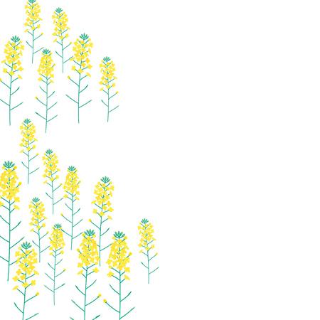Vector illustration of Rape flower