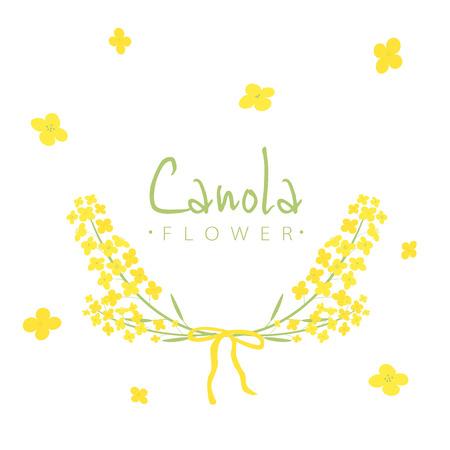 Vector canola flowers frame illustration 일러스트