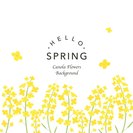 Canola flowers background illustration