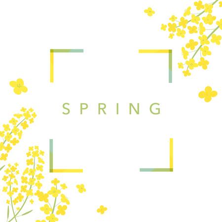 Canola flowers background illustration