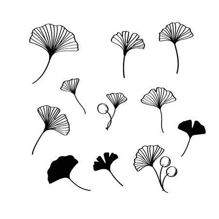 Black ginkgo leaves and nuts vector illustration set Vettoriali